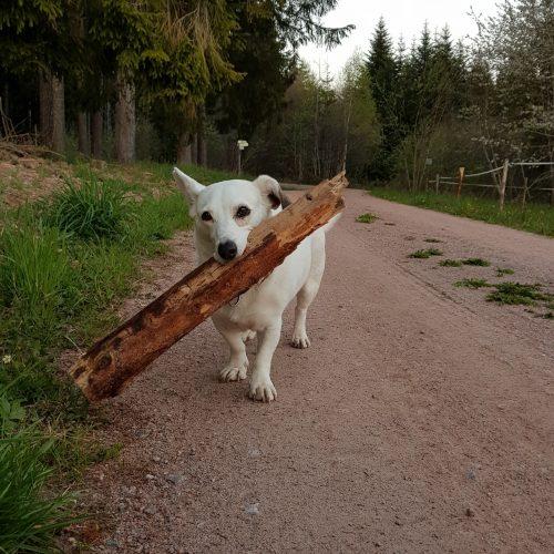 Bild vom Hund fewo-Kirnbergsee